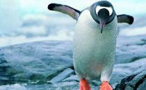 离开腾讯的日子:单飞的企鹅中会出现下一个马化腾吗?
