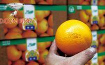 """京东""""假禇橙""""事件的几个关键性疑点"""