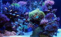 Fishbit鱼缸智能监控不会让你的热带鱼挂掉