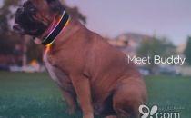 让狗狗更加安全和健康 智能狗项圈Buddy
