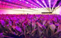 在高科技农场种菜是怎样的体验