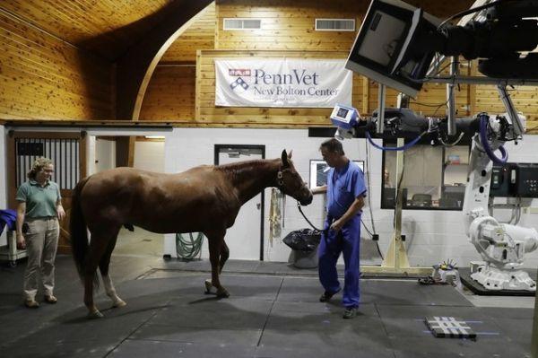 机械臂 ct 扫描首次实现了在动物站立的情况下拍摄解剖学照片,它完全