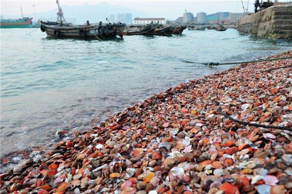 it之家讯 12月3日消息,在海边捡贝壳在很多人心中是一件浪漫的事情