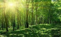 我国森林植被总碳储量已达92亿吨 为实现碳中和目标发挥更大作用